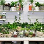 plants display