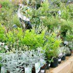garden plants on display